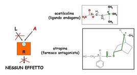 Fig. 7 L'atropina è un esempio di farmaco antagonista