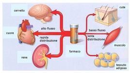 Fig. 9 Distribuzione di un farmaco in funzione del grado di vascolarizzazione dei tessuti