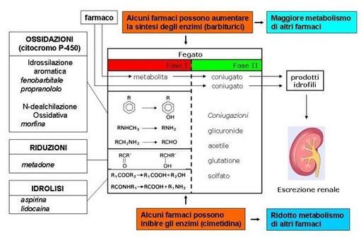 Fig. 11 Schema riassuntivo del metabolismo dei farmaci