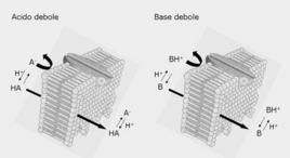 Fig. 3 Diffusione attraverso la membrana lipidica di specie non ionizzate di acido o base debole
