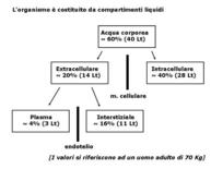 Fig. 7 Volumi dei compartimenti corporei