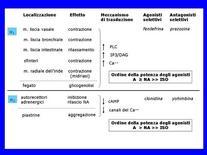 Fig. 2 Caratteristiche dei recettori α-adrenergici