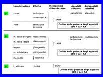 Fig. 3 Caratteristiche dei recettori β-adrenergici