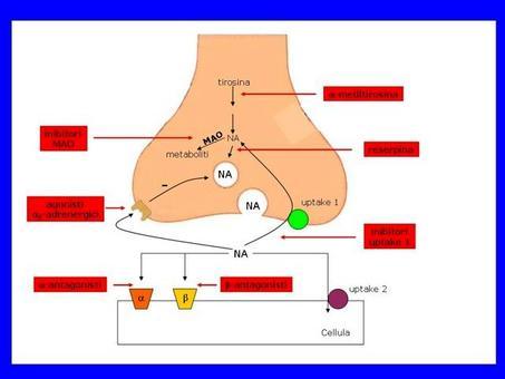 Fig. 7 Siti d'azione di vari farmaci che agiscono sulla trasmissione adrenergica