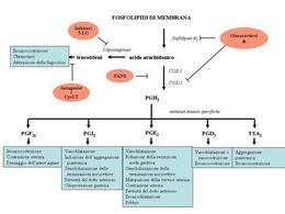 Fig. 6 Azioni degli eicosanoidi e siti d'azione dei farmaci antiinfiammatori.