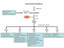 Fig. 2 Schema di sintesi degli eicosanoidi, loro principali azioni e sede d'azione dei FANS.