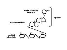 Fig. 8 Struttura chimica dei glicosidi digitalici.