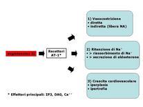Fig. 8 Azioni dell'angiotensina II.