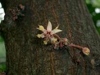 Particolare del fiore (caulifloria). Fonte: Universität Karlsruhe