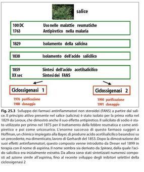 Dal salice agli inibitori selettivi delle ciclossigenasi. Fonte: Capasso/Grandolini/Izzo, Fitoterapia, Springer, 2006