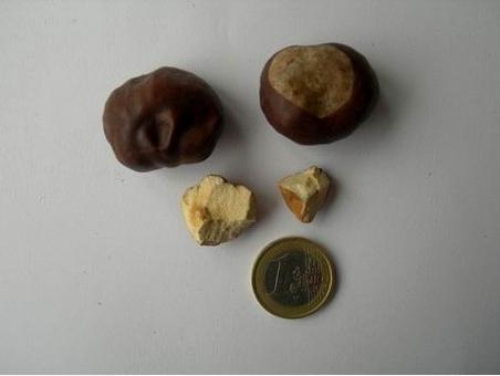 Semi di Aesculus hippocastanum. Fonte: Borrelli/Capasso/Izzo