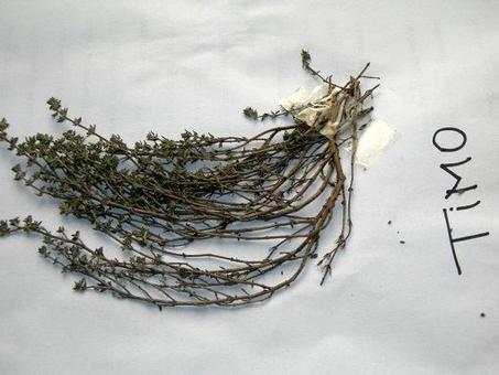 Timo essiccato (Thymus vulgaris). Fonte: Borrelli/Capasso/Izzo