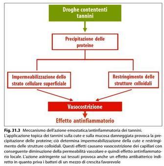 Azione emostatica/antinfiammatoria dei tannini. Fonte: Capasso/Grandolini/Izzo, Fitoterapia. Springer, 2006