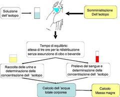 Schema di effettuazione della diluizione isotopica