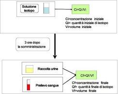 Concentrazione isotopo iniziale e finale