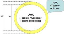 Area muscolare ed adiposa del braccio. d2= diametro dell'area totale del braccio d1= diametro dell'area muscolare del braccio