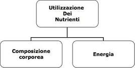 Definizione pratica di stato nutrizionale.