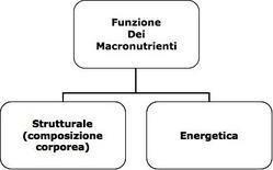 Funzione dei macronutrienti.