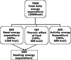 Componenti  della spesa energetica e loro contributo percentuale alla spesa energetica totale.