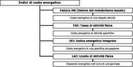 Gli indici di costo energetici indicati sono elencati in ordine di complessità e sono tutti espressi come multipli del metabolismo basale. Dal Commission of European Communities (1993).
