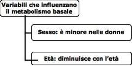 Fattori che influenzano il metabolismo basale.