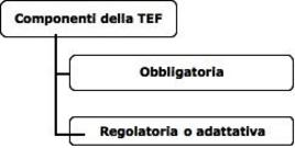 Componenti  della TEF.