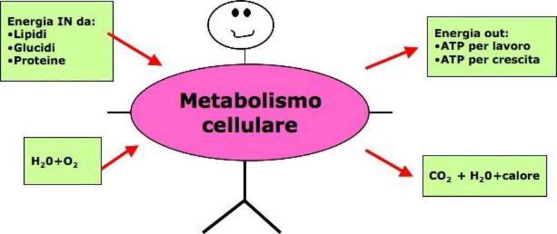 Assunzioni sul metabolismo cellulare su cui si basano le tecniche di misurazione della spesa energetica.