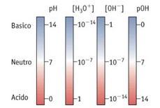 Relazione tra concentrazioni di ioni idronio ed ossidrile e tra pH e pOH
