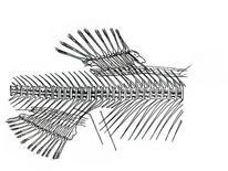 Pinna dorsale e anale, Fonte: modificata da Padoa, Manuale di anatomia comparata dei vertebrati