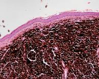 Osservazione al microscopio 10X
