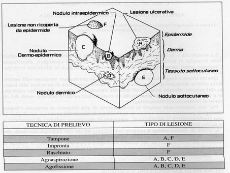 Le tecniche di prelievo variano in base:alla localizzazione anatomica, al tipo di lesione, alla possibilità di contenimento dell'animale.