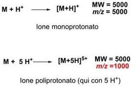A parità di peso molecolare, ioni a carica multipla hanno un rapporto m/z minore