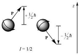 Anche l'orientazione del vettore momento di spin nucleare P è quantizzato