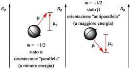 In presenza di un campo magnetico, gli stati di spin hanno energia diversa.
