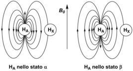 Se HA è nello stato α, HX risulta schermato, se è nello stato β, HX risulta deschermato