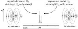 Il segnale di HX è un doppietto (ha due rami) perché HA può trovarsi in due stati di spin