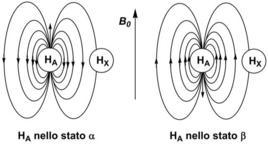 Senza disaccoppiamento, il protone X è schermato oppure deschermato