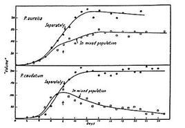 Figura 13.1: Crescita di due popolazioni di Parameciumin colture singole e miste. I dati sperimentali sono individuati dai cerchietti, laddove in linea continua sono indicati i grafici previsti dai modelli logistico, per coltura singola, e di competizione, per quella mista.