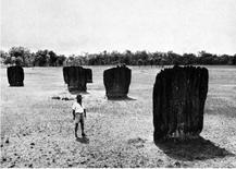 Nidi di Termite Bussola (Anitermes Meridionalis) nella steppa australiana (da K. Von Frisch L'architettura degli animali)
