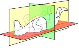 Fig. 13: Piani anatomici fondamentali