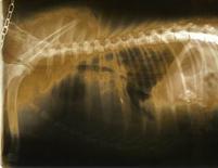 Radiografia con insufficiente risciacquo