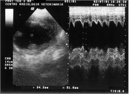 Es. di visualizzazione in TM-mode (cane con cardiomiopatia dilatativa)