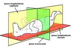 Piani anatomici fondamentali