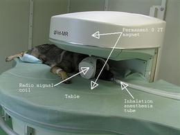 Paziente posizionato in un apparecchio RM aperto. Fonte: Aisti