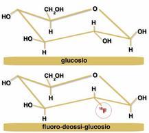 Radiofarmaci: glucosio e 18fluoro-deossi-glucosio