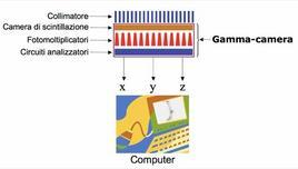 Rappresentazione schematica delle componenti di una Gamma-camera