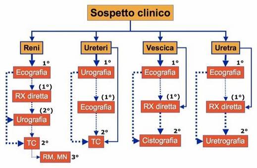 Algoritmo diagnostico dell'apparato urinario