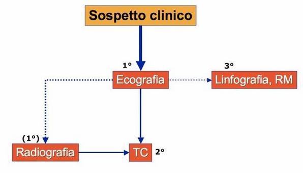 Algoritmo diagnostico dei linfonodi