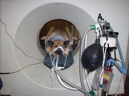 Studio TC dell'addome in un cane