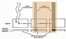 Fig. 10: Densità radiografica